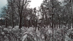 Flying through winter trees toward mountain landscape in Patagonia Stock Footage