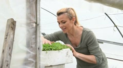 Farmer in greenhouse preparing aromatic plants Stock Footage