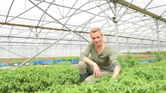 Farming worker in greenhouse Stock Footage