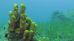 Marine fish swim on the background of underwater scenery. Stock Footage