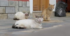 Three domestic cat sitting on a terrace and sleeping in the sun Stock Footage
