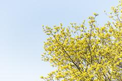 Springtime trees in park with blue sky and vibrant colors - stock photo