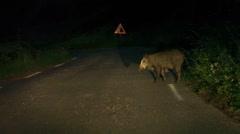 Wild boar crossing road at night Stock Footage