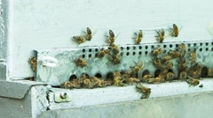 Honeybees emerging from artificial hive Stock Footage