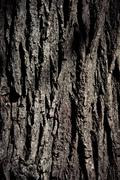 Rough texture of tree trunk in close up - stock photo