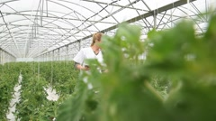 Agronomist analysing plants in greenhouse - stock footage