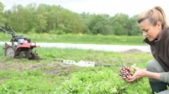 Farmer woman in field collecting vegetables Stock Footage
