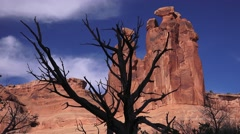Tree silhouette, ARCHES NATIONAL PARK, THREE GOSSIPS Stock Footage