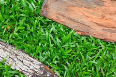 Tree bark texture with grass. Skin the bark of a tree that traces cracking wi - stock photo