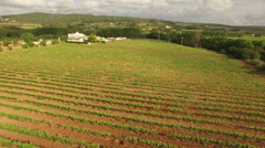 Vineyard Fields at Sunset Aerial View Stock Footage