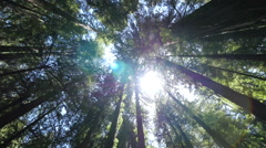 Forest trees low angle moving walking dolly POV shot sunlight lens flare Stock Footage