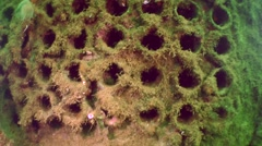 Steam boiler of wreck, zoom out. Stock Footage