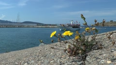 Yellow flowers growing at the port breakwater - stock footage