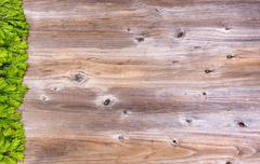 New fir tree branch tips on rustic wood board for holiday season Stock Photos
