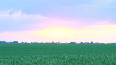 sunset over grass field - stock footage