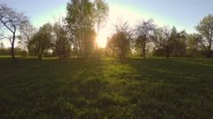 Green summer park. Sunset. Low altitude flight. Aerial footage. Stock Footage