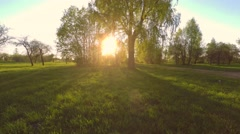 Green summer park. Sunset. Low altitude flight. Aerial footage. - stock footage