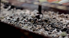 Stirring coals in fire pit Stock Footage
