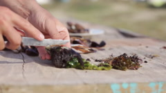 Person cleaning fresh mussels Stock Footage