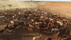 Aerial cattle station in australia Stock Footage