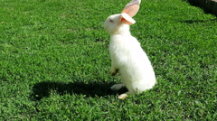 White rabbit on green grass staying Stock Footage