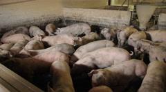 Pig farm in Eastern Europe Stock Footage