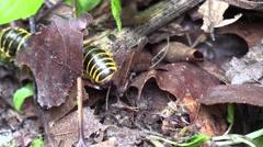 Millipede on forest floor Stock Footage