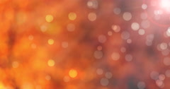 Looping natural autumn season tree foliage bokeh out of focus motion background Stock Footage