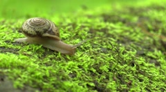Large snail on a log in forest nature Stock Footage