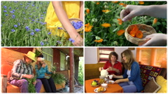 Hand gather herbs and women drink herbal tea. Footage collage Stock Footage