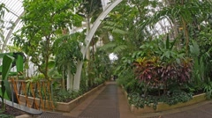 The Palm house in Kew gardens, London Stock Footage
