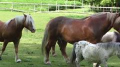Horses in corral farm scene - stock footage