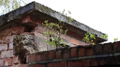 Plant growing on the brick wall Stock Footage