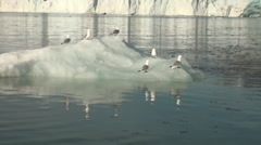 Seagulls sit and float on an iceberg in Arctic. Stock Footage
