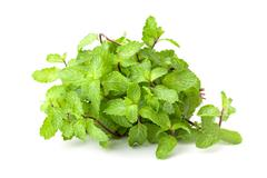 Kitchen Mint or Marsh Mint Stock Photos