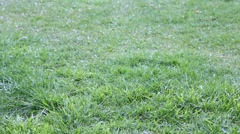 Rain and hail storm on green grass. Stock Footage