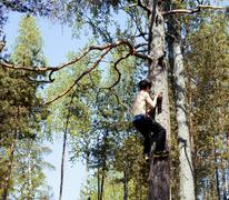 Young man climbing on tree in forest close up hight, hanging dangerously Stock Photos
