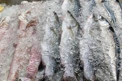 Fresh fishes in ice Stock Photos