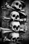 Collection of skull and bones Stock Photos