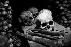 collection of skull and bones - stock photo