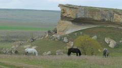 Three Horses Grazing Near Rock Stock Footage