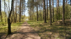 Forest in sunlight in spring Stock Footage