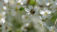 bee pollinating flowering trees spring flowers slow motion nature summer - stock footage