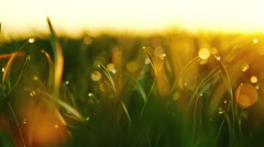 DOLLY MOTION: background of dew drops on bright green grass with sun beam - stock footage