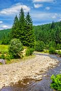 Mountain river in Conifer forest Stock Photos
