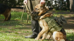 Shepherd dog on military training. Stock Footage