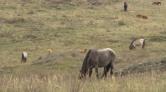 Horses Grazing in the Mountains in Early Spring Stock Footage