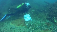 A diver collects Veined Rapa Whelk in the bag. - stock footage