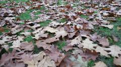 Autumn leaves on grass steadicam 4K - stock footage