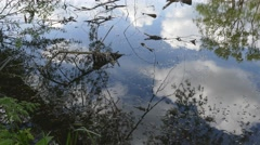 Reflection in the water of the lake. Trees, branches, leaves, white clouds. - stock footage
